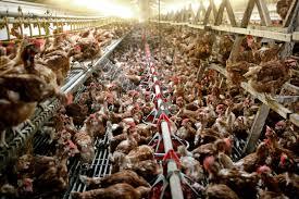 1803-vlees-eieren