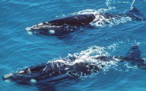 1905-walvissen-biodiversiteit